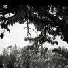Thumbnail_tre-sedie-2020-324x160