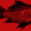 Thumbnail_tempo-ritrovato-pesce